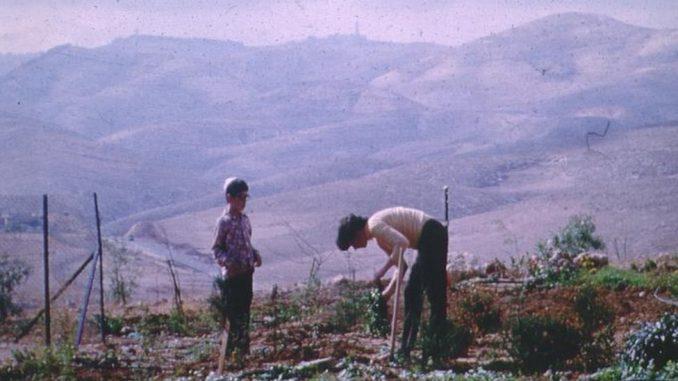 """Izrael, kibuci i Srbija: """"Ne verujem da bilo gde na svetu može da se živi tako"""" 3"""