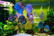 U Javnom akvarijumu: Mesto gde su životinje uvek na prvom mestu 31