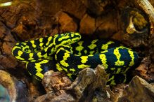 U Javnom akvarijumu: Mesto gde su životinje uvek na prvom mestu 32
