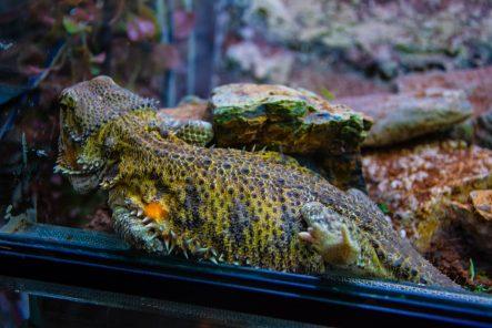 U Javnom akvarijumu: Mesto gde su životinje uvek na prvom mestu 33