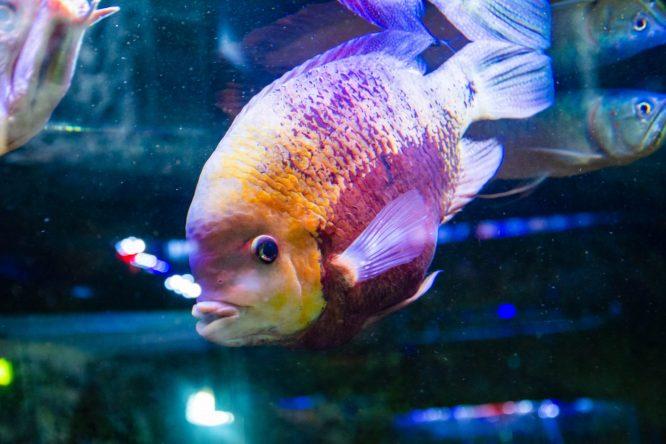 U Javnom akvarijumu: Mesto gde su životinje uvek na prvom mestu 34