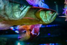 U Javnom akvarijumu: Mesto gde su životinje uvek na prvom mestu 14
