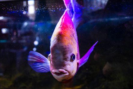 U Javnom akvarijumu: Mesto gde su životinje uvek na prvom mestu 13