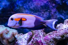 U Javnom akvarijumu: Mesto gde su životinje uvek na prvom mestu 16