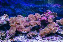 U Javnom akvarijumu: Mesto gde su životinje uvek na prvom mestu 17