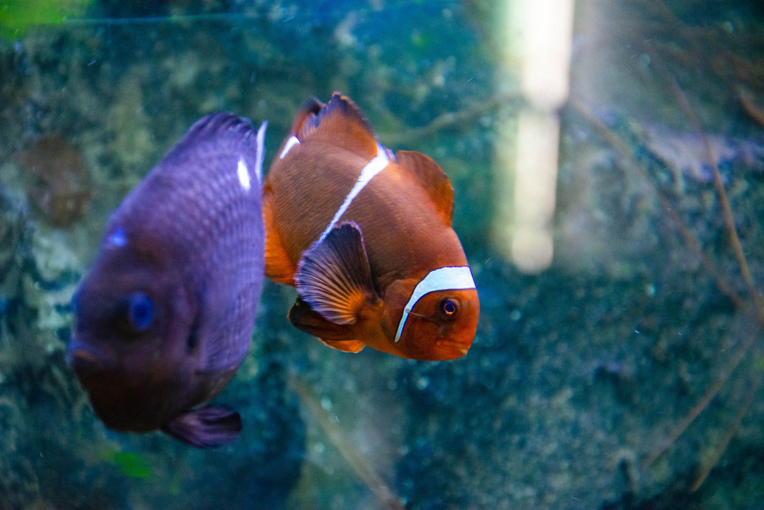 U Javnom akvarijumu: Mesto gde su životinje uvek na prvom mestu 5