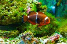 U Javnom akvarijumu: Mesto gde su životinje uvek na prvom mestu 18