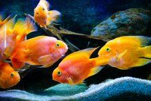 U Javnom akvarijumu: Mesto gde su životinje uvek na prvom mestu 19