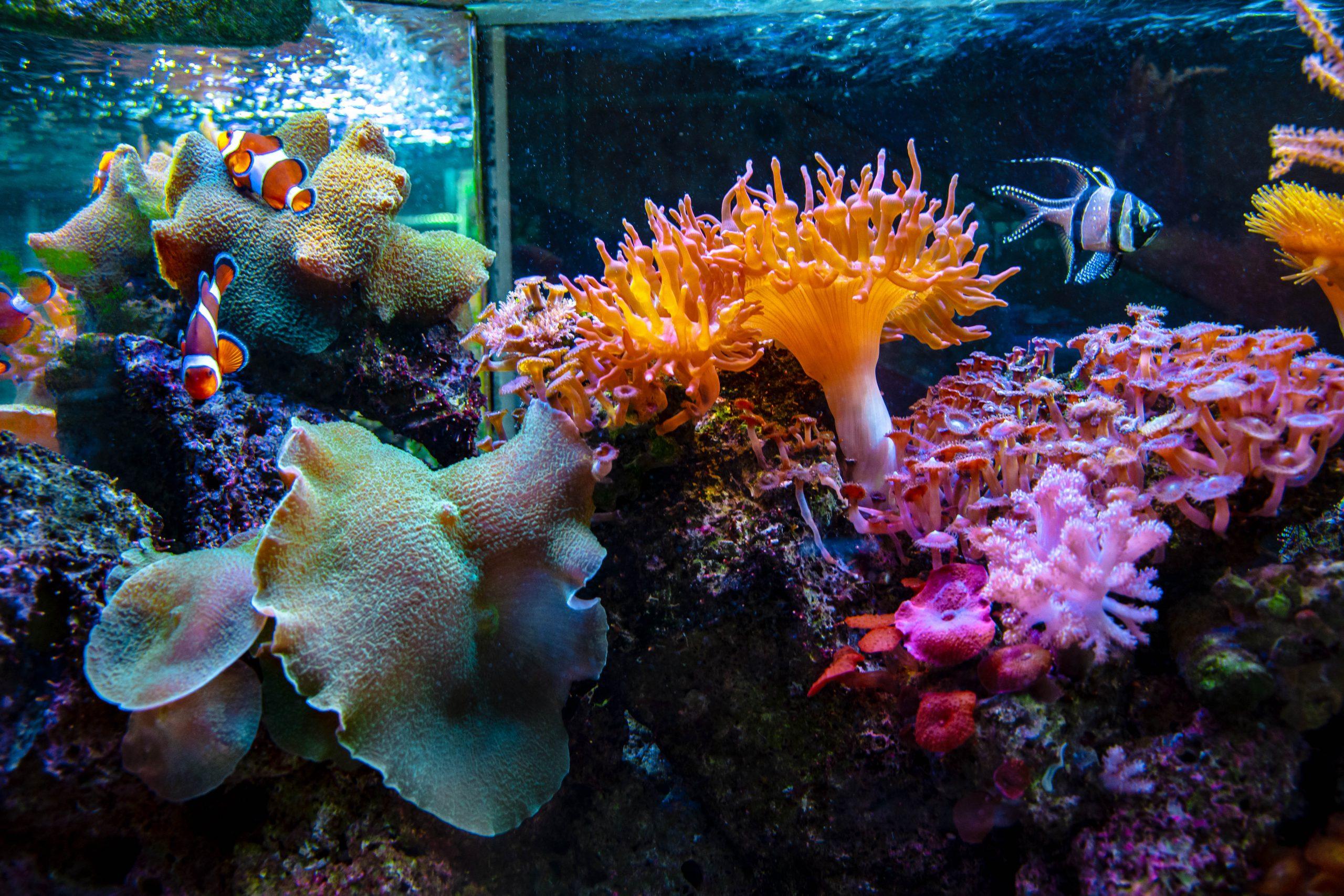 U Javnom akvarijumu: Mesto gde su životinje uvek na prvom mestu 2