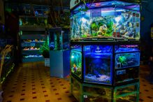 U Javnom akvarijumu: Mesto gde su životinje uvek na prvom mestu 20