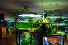 U Javnom akvarijumu: Mesto gde su životinje uvek na prvom mestu 22