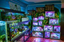 U Javnom akvarijumu: Mesto gde su životinje uvek na prvom mestu 23