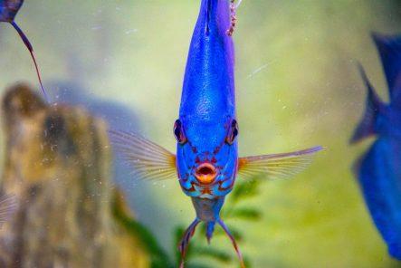U Javnom akvarijumu: Mesto gde su životinje uvek na prvom mestu 21