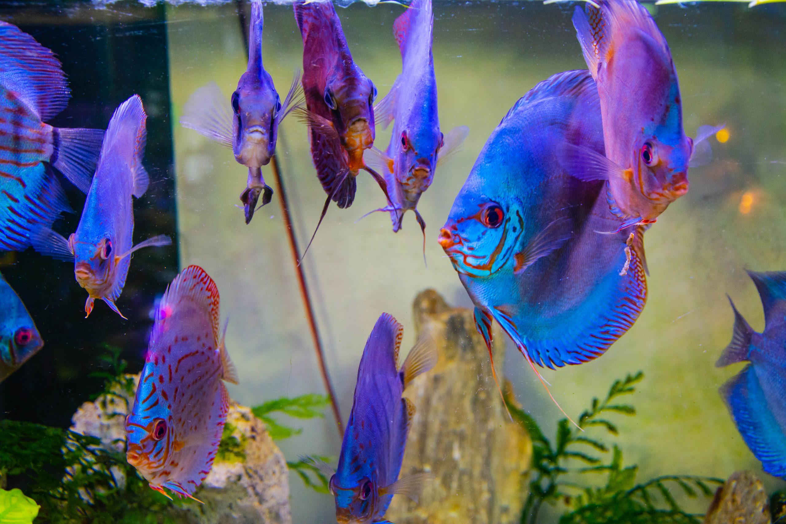 U Javnom akvarijumu: Mesto gde su životinje uvek na prvom mestu 11