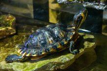 U Javnom akvarijumu: Mesto gde su životinje uvek na prvom mestu 24