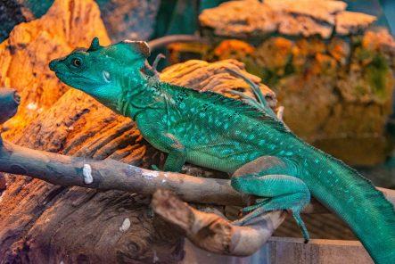 U Javnom akvarijumu: Mesto gde su životinje uvek na prvom mestu 25