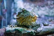 U Javnom akvarijumu: Mesto gde su životinje uvek na prvom mestu 26