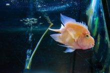 U Javnom akvarijumu: Mesto gde su životinje uvek na prvom mestu 28