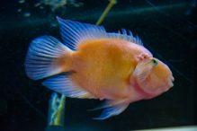 U Javnom akvarijumu: Mesto gde su životinje uvek na prvom mestu 29
