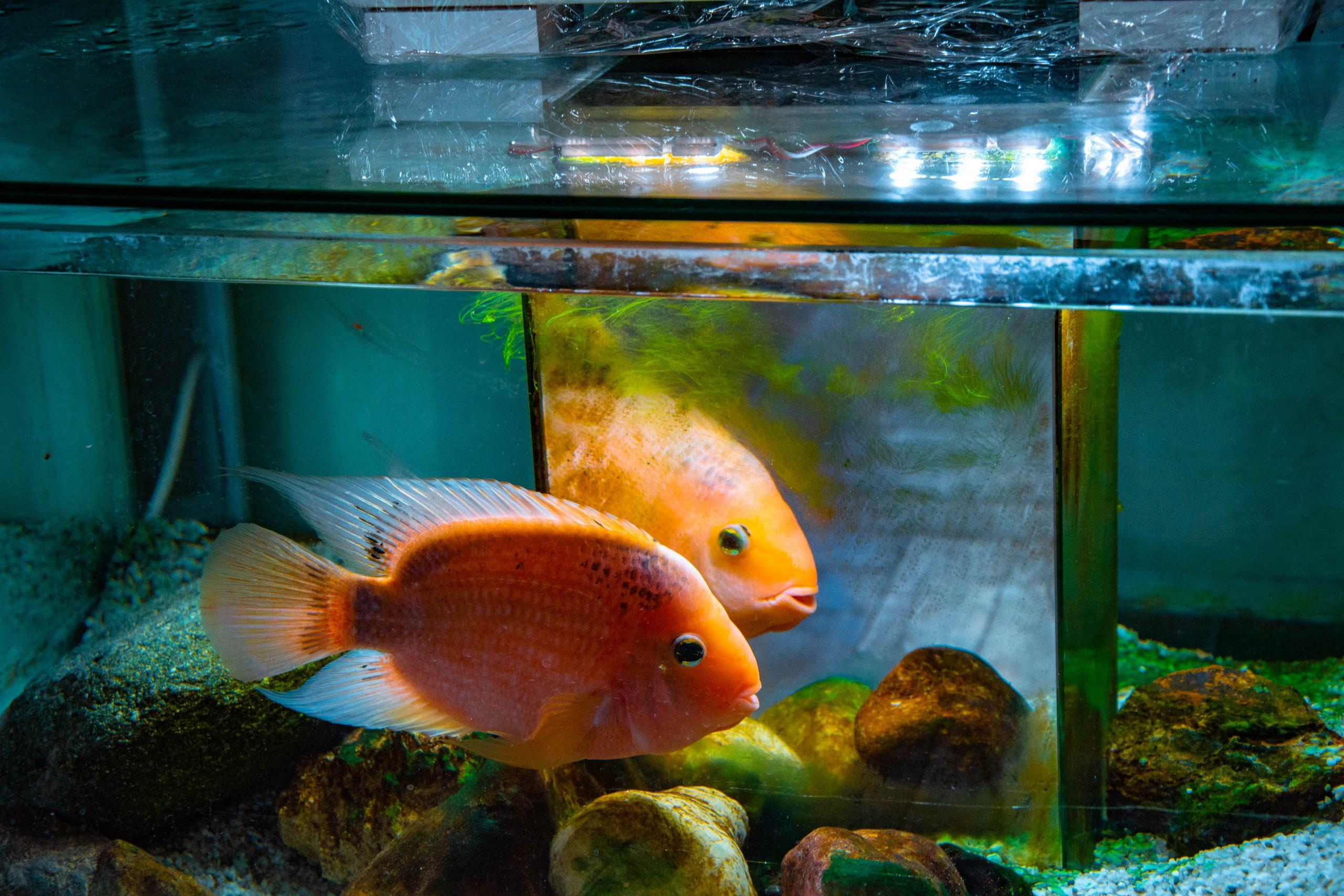 U Javnom akvarijumu: Mesto gde su životinje uvek na prvom mestu 8