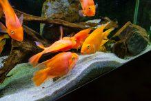 U Javnom akvarijumu: Mesto gde su životinje uvek na prvom mestu 30