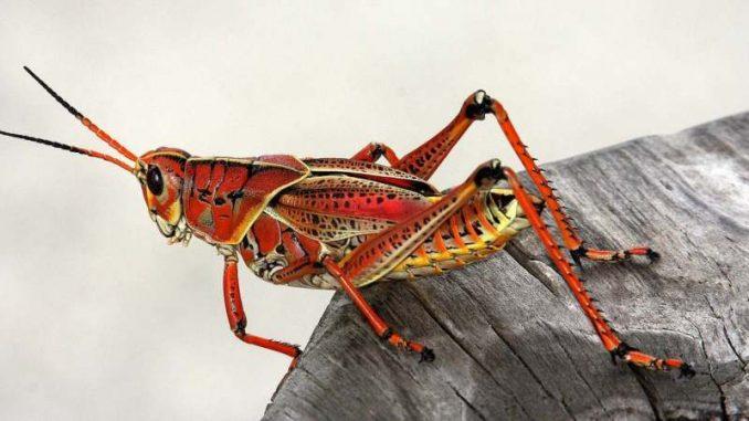 Beč: Insekti kao proteini budućnosti 1