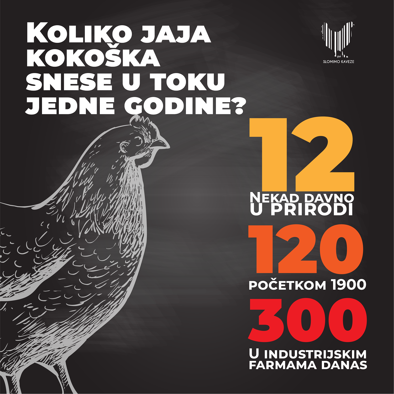 Ko je stariji – kokoška ili živinarstvo? 2