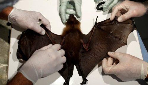 Korona virus i divlje životinje: Raste strah od bolesti koje se prenose sa životinje na čoveka 19