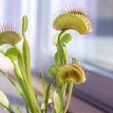 Biljke imaju svoj unutrašnji, biološki sat 8