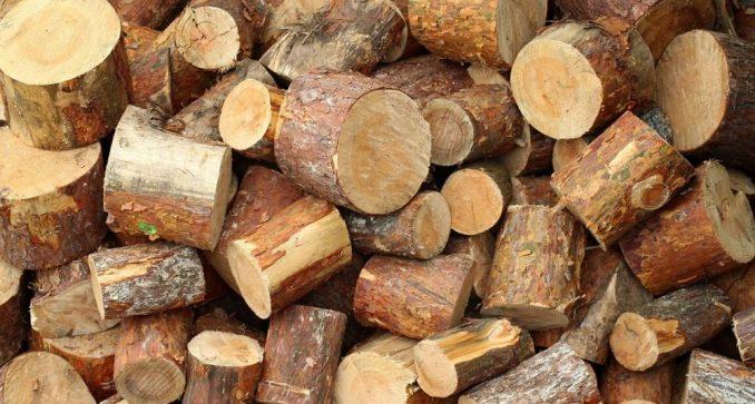 Dvojica muškaraca iz okoline Kragujevca na prevaru posekla oko 540 stabala 2