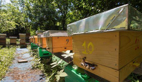 Otvoren prvi azil za pčele u Beogradu 2