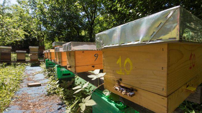 Otvoren prvi azil za pčele u Beogradu 3