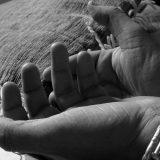 Prevencija je osnov za veću svest o problemu trgovine ljudima 9