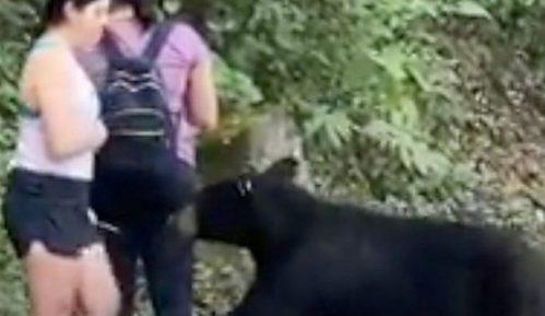 Meksiko i životinje: Divlji medved koji je onjušio ženu uhvaćen i kastriran 15