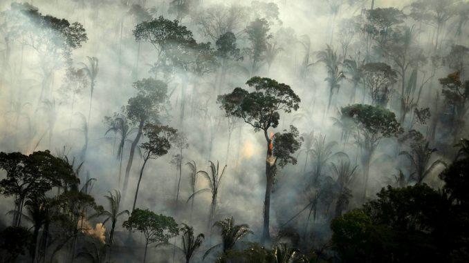 Brazil i Amazonija: Strašni požari bi ponovo ponovo mogli da progutaju prašume 2