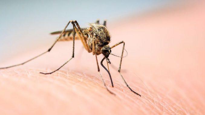 Leto, alkohol i komarci: Zašto češće napadaju kada pijete 1