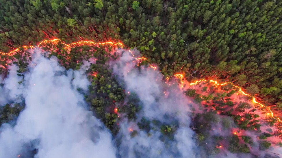 Forest fire in Siberia from above