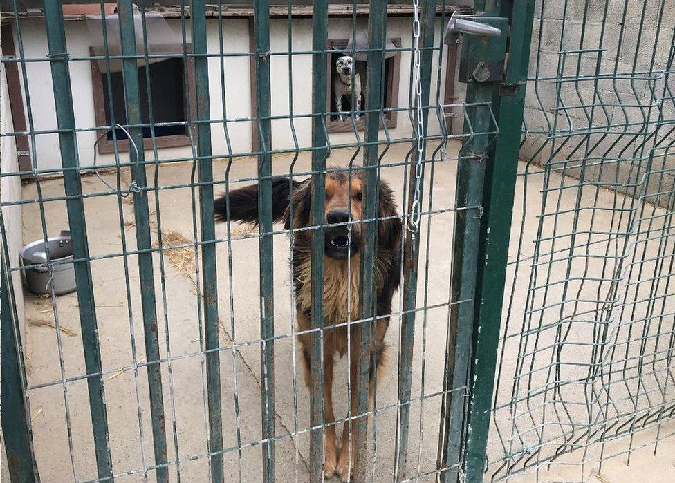 Pas u azilu blizu Tuluza