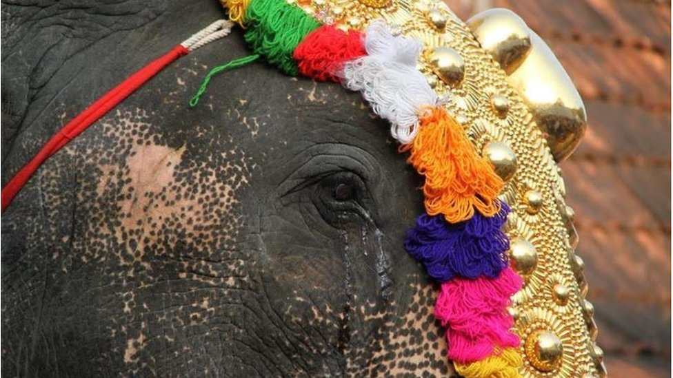 An elephant with tears pouring from its eye