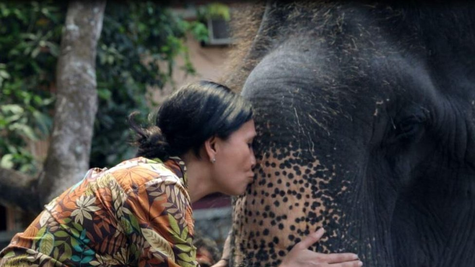 Sangita kissing Lakshmi's trunk