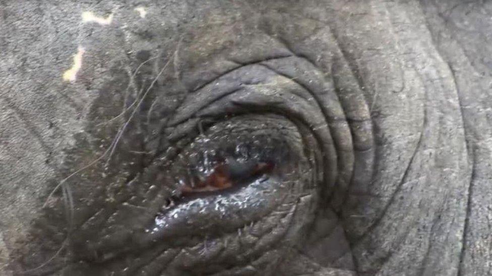 Close-up of Lakshmi's injured eye