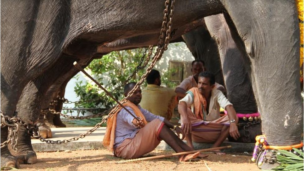 Handlers sitting in the shade of elephants