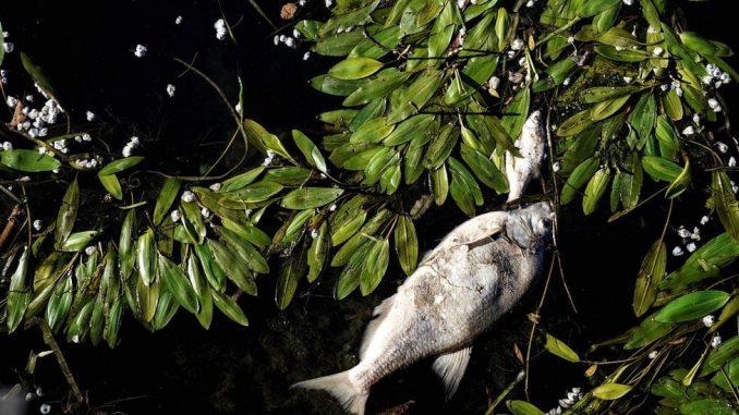 Životna sredina: Tužba za kompaniju Nestle zbog tona mrtve ribe u reci u Francuskoj 2