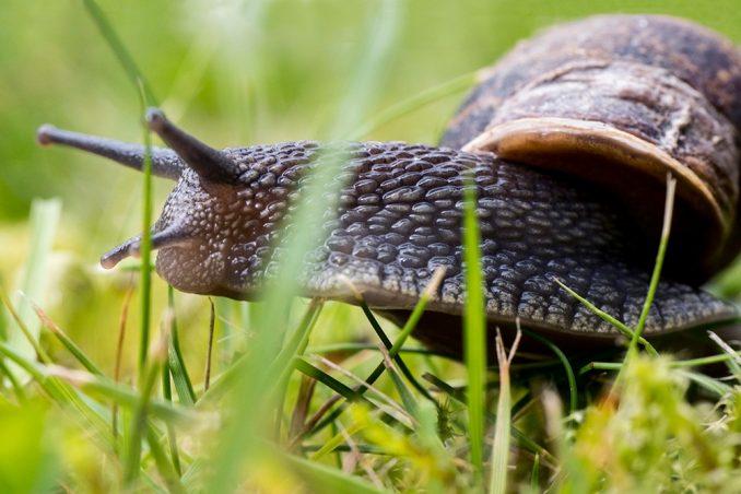 Ta divna stvorenja u našim baštama - vaše fotografije stanovnika i posetilaca naših vrtova 3