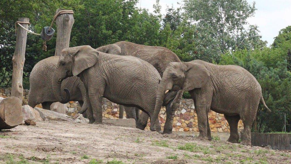 Zoo vrt u Varšavi izgubio je u martu najstariju slonicu