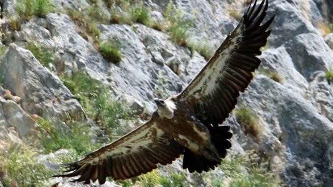 MUP Srbije povodom stradanja ptica saopštio da nije nadležan za kontrolu preleta helikoptera 3