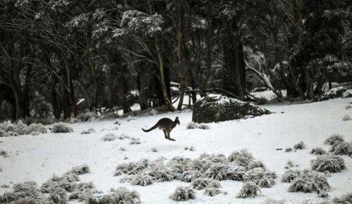 Sneg u Australiji 9