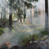Da li zbog klimatskih promena ima više šumskih požara? 14