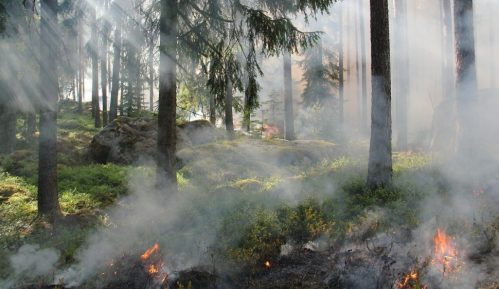 Da li zbog klimatskih promena ima više šumskih požara? 13