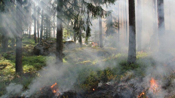 Da li zbog klimatskih promena ima više šumskih požara? 1